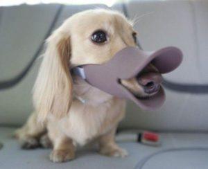 изобретения для собак, костюмы для собак, маски для собак, одежда для собак, смешные собаки, смешная одежда для собак, смешная одежда